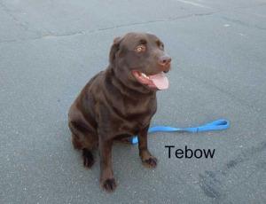 Tebow