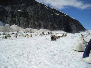 dog-camp