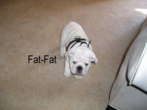 fat-fat-1