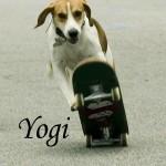 Yogi skateboarding